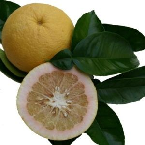 Pamplemoussier (Citrus Grandis)