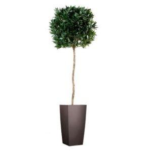 Laurier boule, 1m80 (tronc naturel, feuillage artificiel) + Pot Cubico (Laurus nobilis)