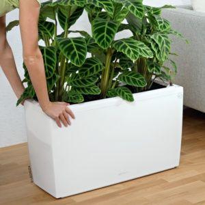 Jardinière Lechuza Cararo Premium L75 H43 cm blanc. PLANTES ET JARDIN – Jardinerie en ligne