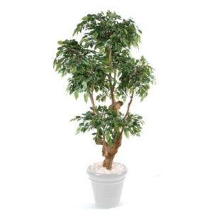 Ficus Boule Natasja artificiel 170cm