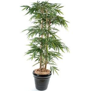 Bambou grosses cannes (tronc naturel) ht 180cm + pot classique