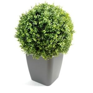 Buis boule + pot quadro anthracite(Buxus sempervirens)