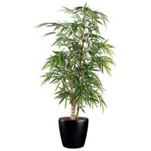 Le lilas le planter le tailler les infos avec jaime - Planter bambou en pot ...