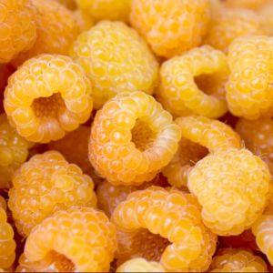 Framboisier 'Fallgold' – En pot de 2 litres