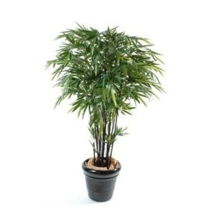 Bambou noir naturel 2m10 12 chaumes + pot classique