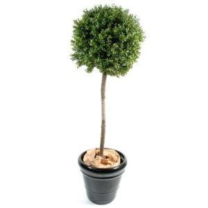 Buis tige boule H 140cm + pot classique (Buxus sempervirens)