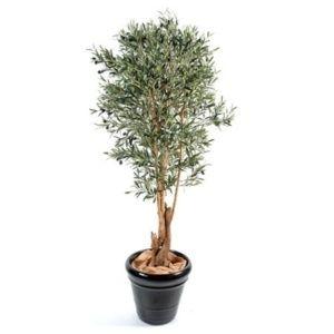 Olivier tronc noueux vert 170 cm + pot classique