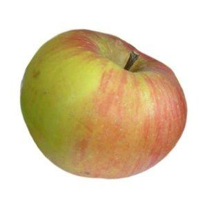 Pommier 'Ontario' : taille en gobelet (Malus communis 'Ontario')