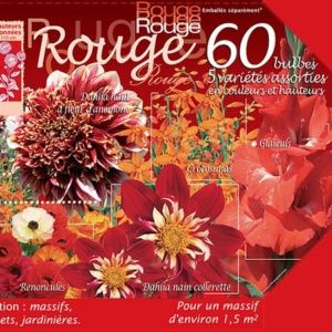 Assortiment de 60 bulbes : Rouge