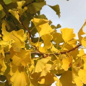 les 8 plus beaux arbres planter pour le jardin gamm vert. Black Bedroom Furniture Sets. Home Design Ideas