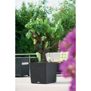 Pot Lechuza Cube Cottage L50 H50 cm granit