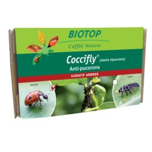 Coccifly Adalia bipunctata 20 coccinelles adultes contre pucerons Biotop
