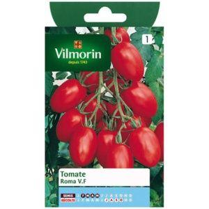 Tomate 'Roma' VF (Lycopersicum esculentum var. Roma)