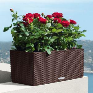 Jardinière Lechuza Balconera Cottage L50 H19 cm mocca + Supports. PLANTES ET JARDIN – Jardinerie en ligne