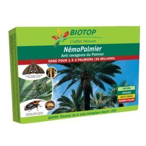 Néma-Palmier 25 millions contre ravageurs du palmier Biotop