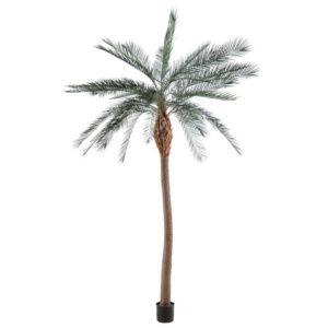 Palmier Phoenix à tronc large H280 cm artificiel non rempoté