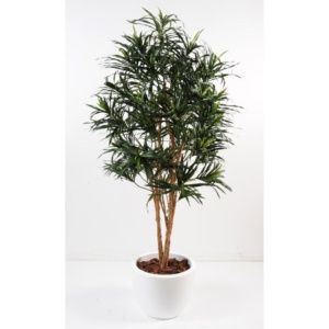 Dracaena Anita semi-artificiel H170 cm en pot pure rond