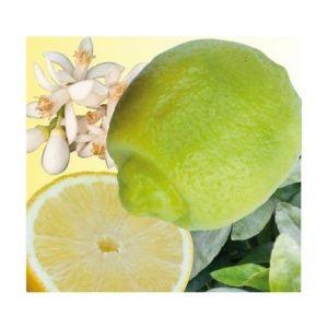 Lime orientale