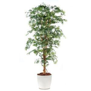 Aralia semi-artificiel grandes feuilles, H180cm, avec pot elho blanc
