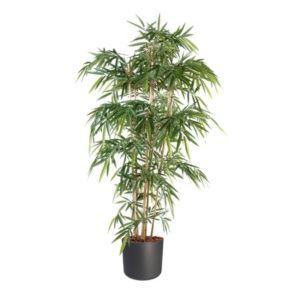 Bambou 6 chaumes H120cm  avec pot Elho anthracite