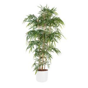 Bambou 6 chaumes H120cm semi-artificiel avec pot Elho blanc