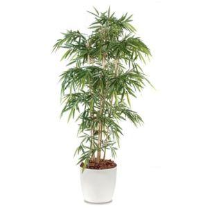 Bambou 6 chaumes H180cm semi-artificiel avec pot Elho blanc
