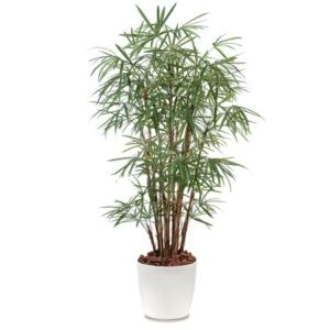 Palmier Raphis Lady Palm H150cm semi-artificiel pot elho blanc