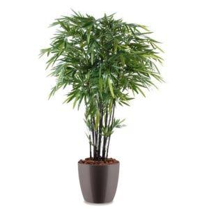 Bambou à cannes noires H180cm semi-artificiel pot Elho gris