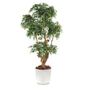 Ficus Natasja 5 têtes H170cm semi-artificiel pot elho blanc