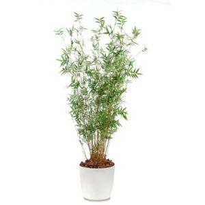Bambou oriental multi-chaumes H130cm semi-artificiel pot Elho blanc