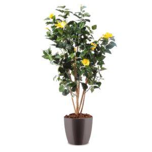 Hibiscus jaune H150c semi-artificiel pot elho gris