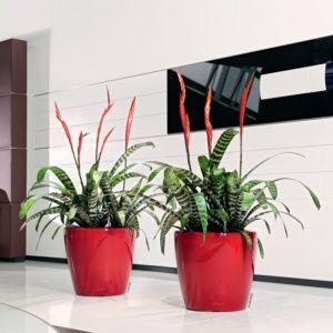 Pot Lechuza Classico Premium Ø35 H33 cm rouge. PLANTES ET JARDIN – Jardinerie en ligne