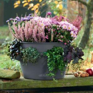 Pot Lechuza Cascada Color Ø49 H28 cm gris. PLANTES ET JARDIN – Jardinerie en ligne