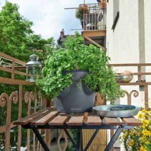 Pot Lechuza Cascadino Color Ø36 H23 cm gris. PLANTES ET JARDIN – Jardinerie en ligne