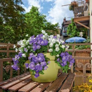 Pot Lechuza Cascadino Color Ø36 H23 cm pistache. PLANTES ET JARDIN – Jardinerie en ligne