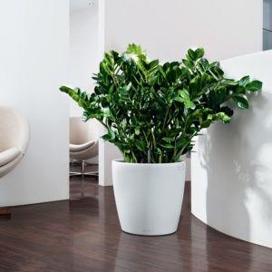 Pot Lechuza Classico Color Ø43 H40 cm blanc. PLANTES ET JARDIN – Jardinerie en ligne