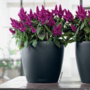 Pot Lechuza Classico Color Ø43 H40 cm gris. PLANTES ET JARDIN – Jardinerie en ligne