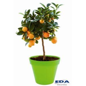 Pot EDA Toscane Ø48 H40 cm pistache