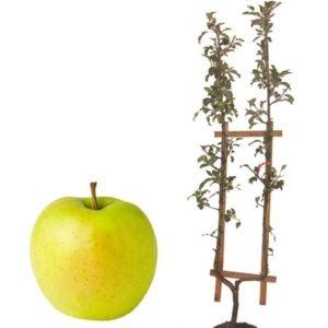 planter un arbre fruitier form le magazine gamm vert. Black Bedroom Furniture Sets. Home Design Ideas