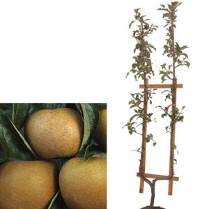 planter un arbre fruitier form 233 le magazine gamm vert