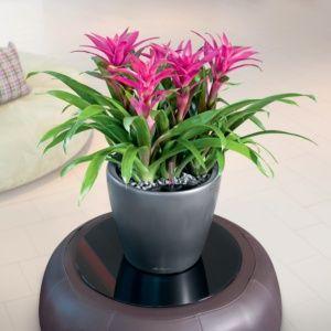 Pot Lechuza Classico Premium Ø35 H33 cm gris métallisé. PLANTES ET JARDIN – Jardinerie en ligne