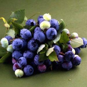 Myrtille à gros fruits 'Bluecrop' – En pot de 2 litres