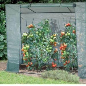 Serre de culture pour tomates