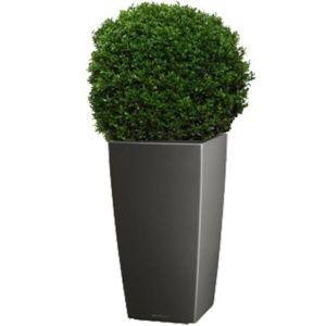 Buis boule (40 – 45 cm) rempoté dans pot Lechuza Cubico anthracite – PLANTES ET JARDINS – Jardinerie en ligne