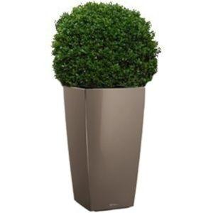 Buis boule (40 – 45 cm) rempoté dans pot Lechuza – PLANTES ET JARDINS – Jardinerie en ligne