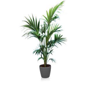 Kentia rempoté dans pot Lechuza – Hauteur 2m – PLANTES ET JARDINS – Jardinerie en ligne