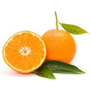 Mandarinier 'Satsuma' – Pot de 5 litres, touffe