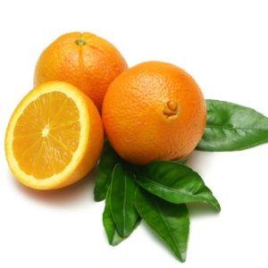Oranger variété navel – Pot de 3 litres – PLANTES-ET-JARDINS