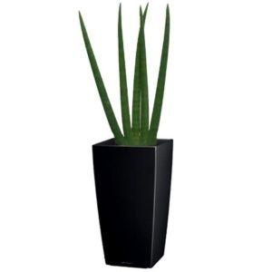Sansevière rempotée dans pot Lechuza cubico noir – hauteur totale 130 cm- PLANTES ET JARDINS – Jardinerie en ligne