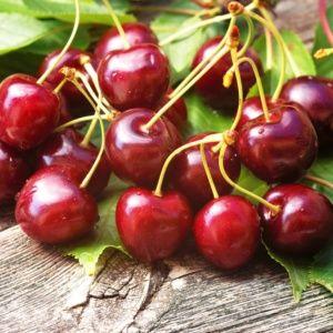 Cerisier de balcon 'Cherry Me' – Pot de 2 litres – PLANTES ET JARDINS